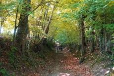 Image_canal_forêt_de_Rennes