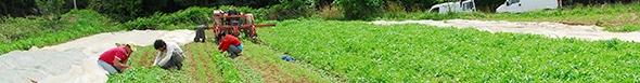 Bandeau_agriculture_périurbaine_soirée_débat